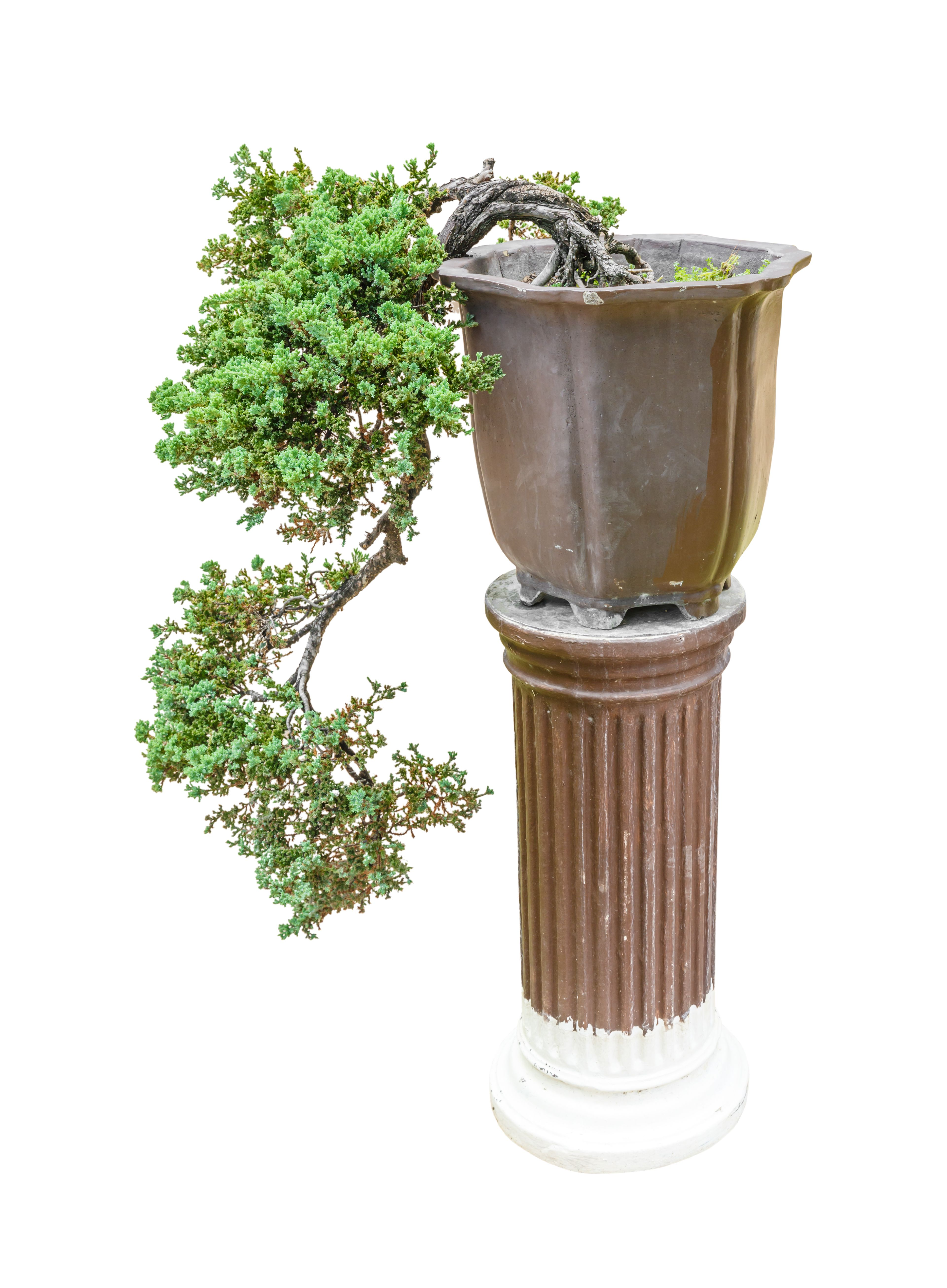 Your Guide To Cascade Bonsai How Take Care Of A Tree Wiring Styles Style Is One The Most Popular Used Today If You Can Picture Growing On Side Cliff Spilling Off Mountain